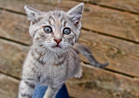 факты о котах