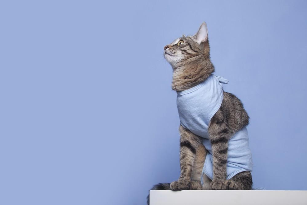Стерилизация кошек и собак. Кастрация котов и псов в Беларуси
