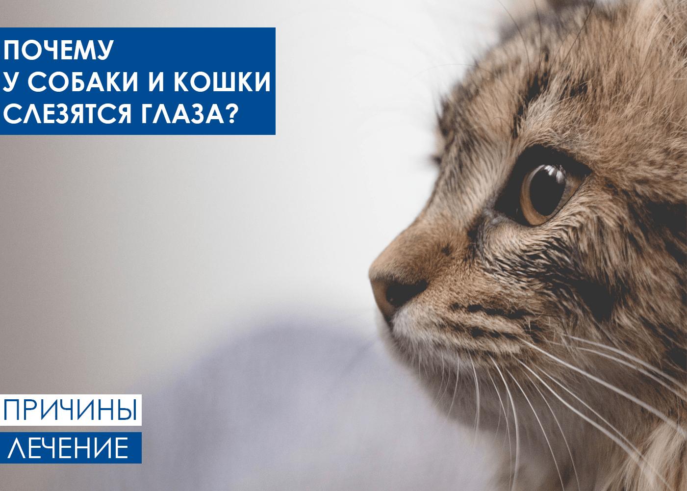 Почему у кошек и собак слезятся глаза