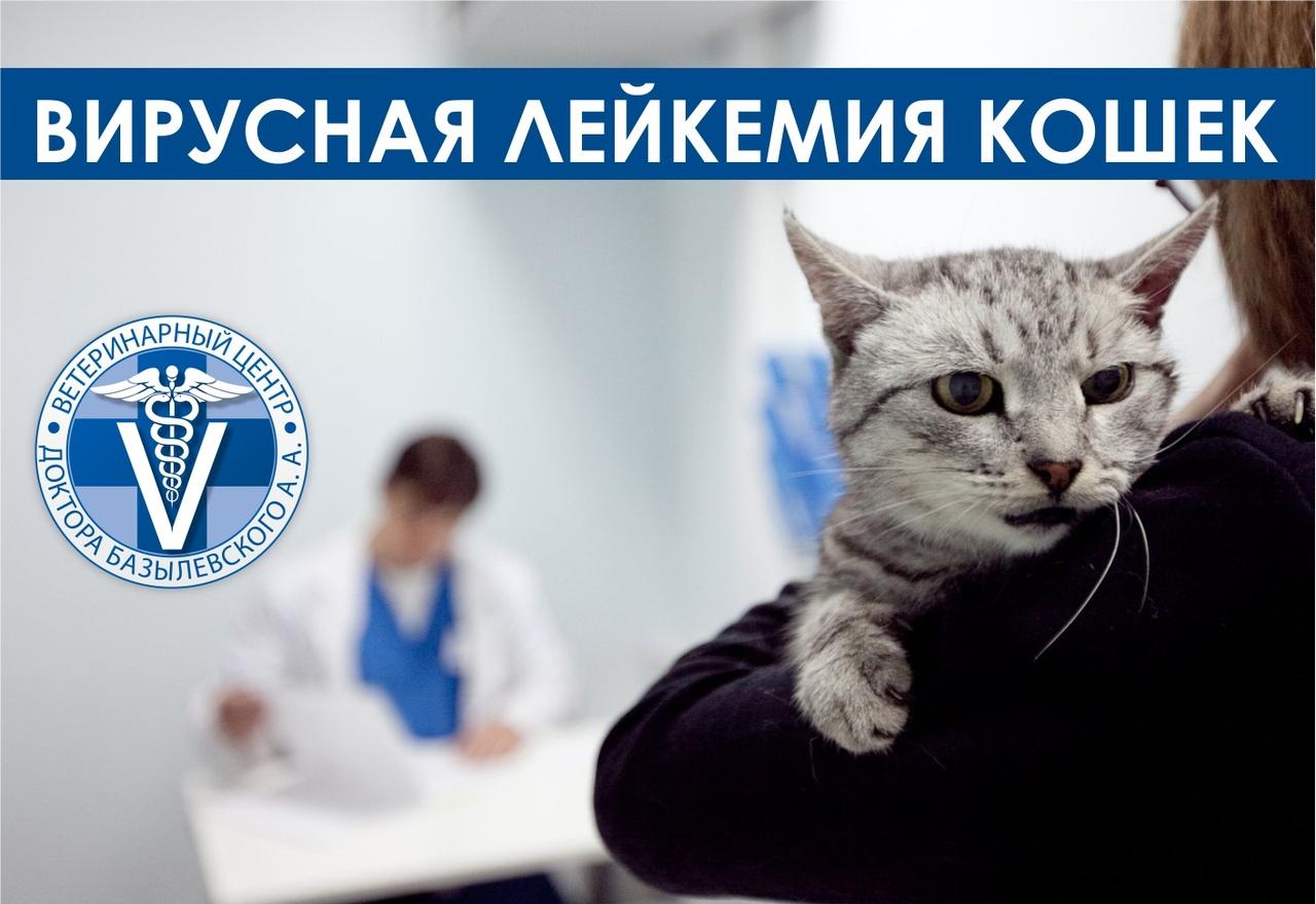 Вирусная лейкемия кошек и котов