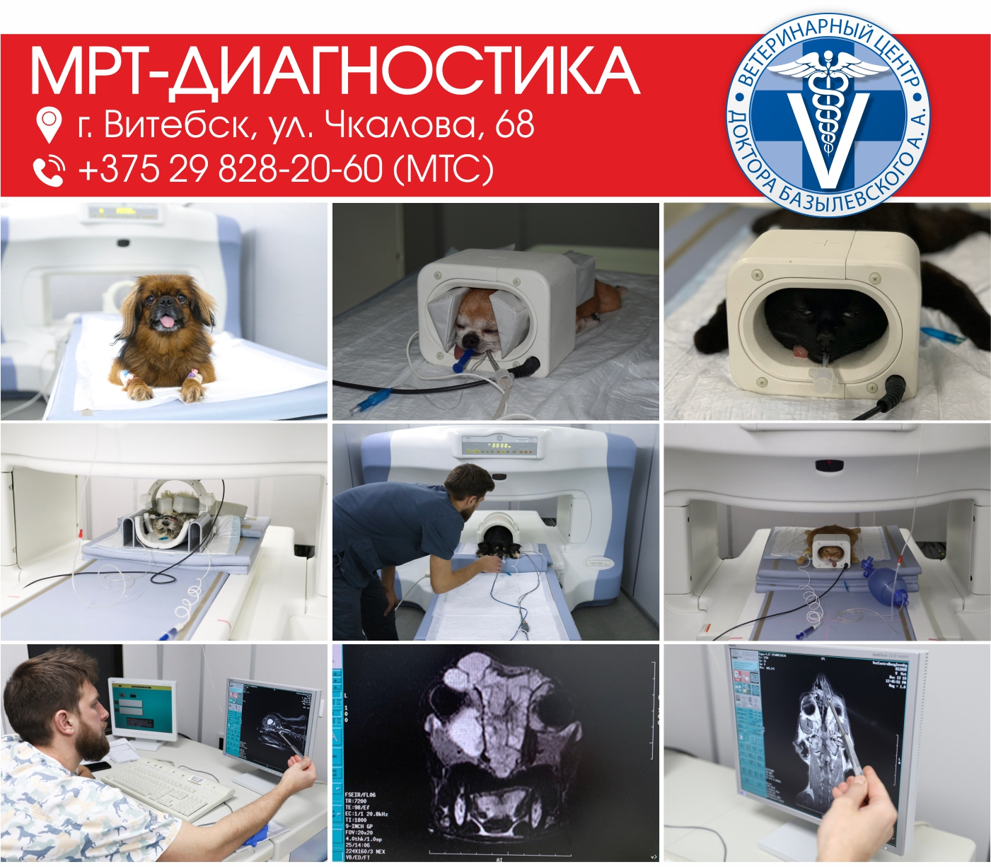 МРТ диагностика животных в Витебске