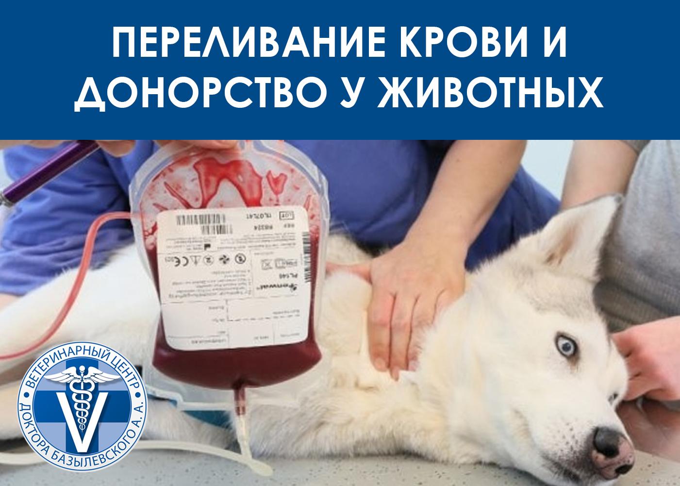 Переливание крови у животных