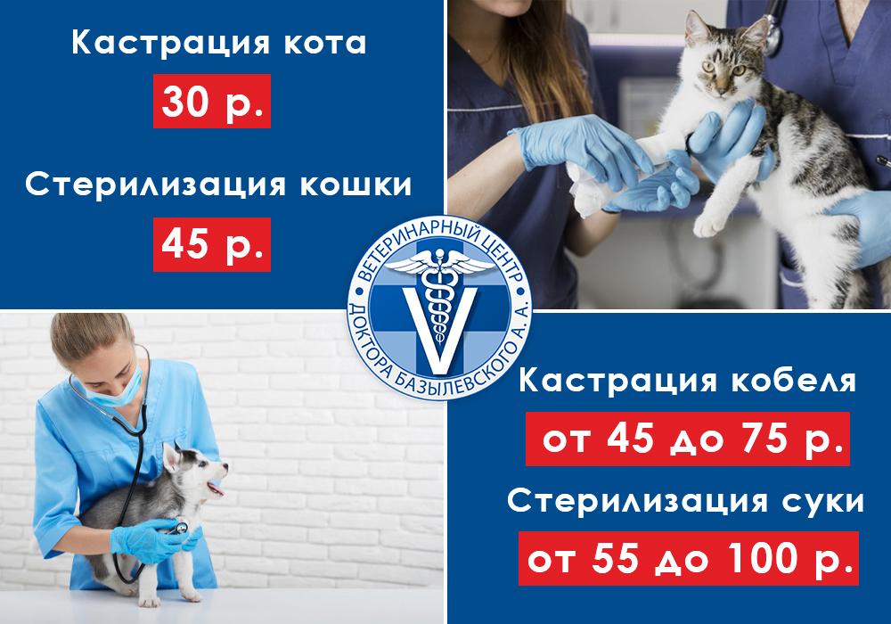 Скидка на услуги кастрации и стерилизации животных в Витебске