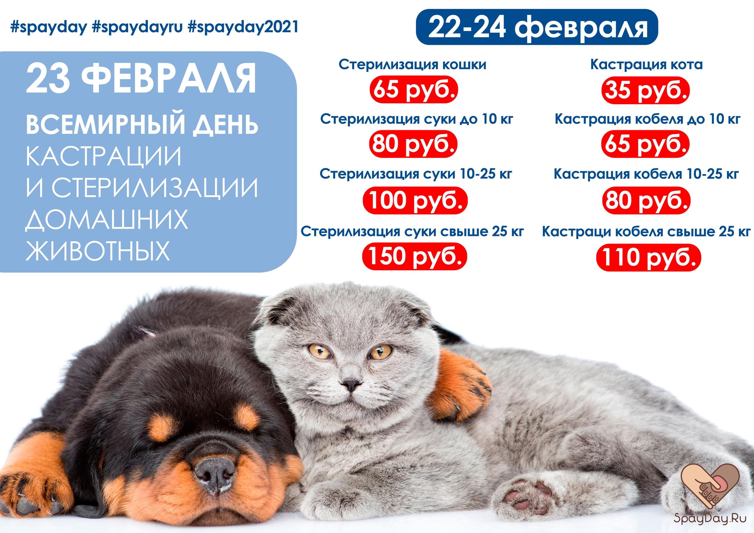 день стерилизации и кастрации 2021 в Ветцентре Базылевского А.А.
