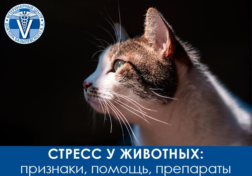 Стресс у животных