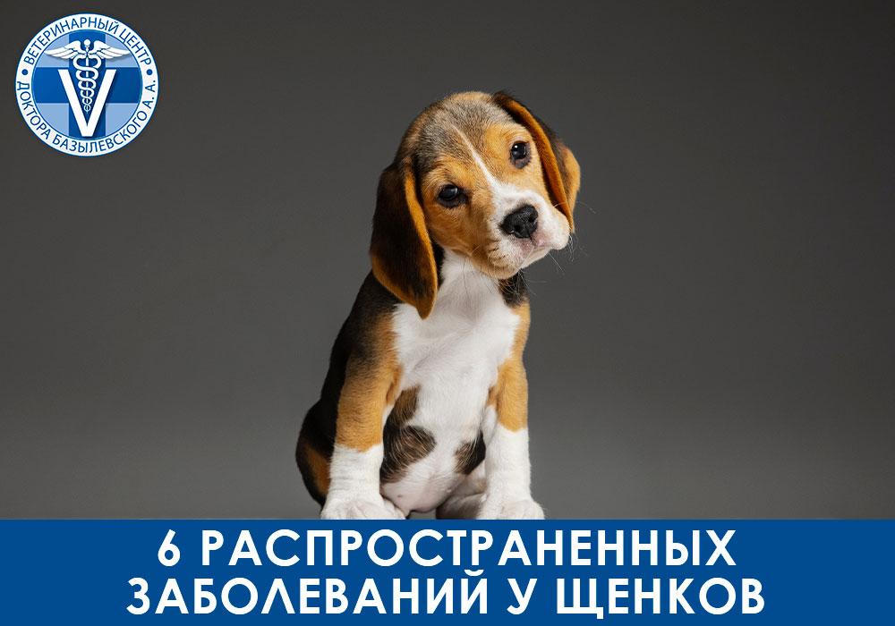 6 распространенных заболеваний у щенков