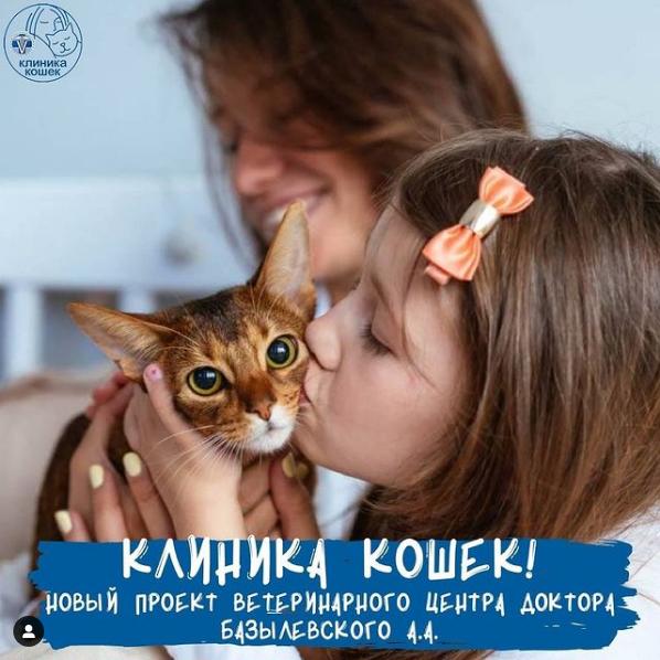 Клиника кошек