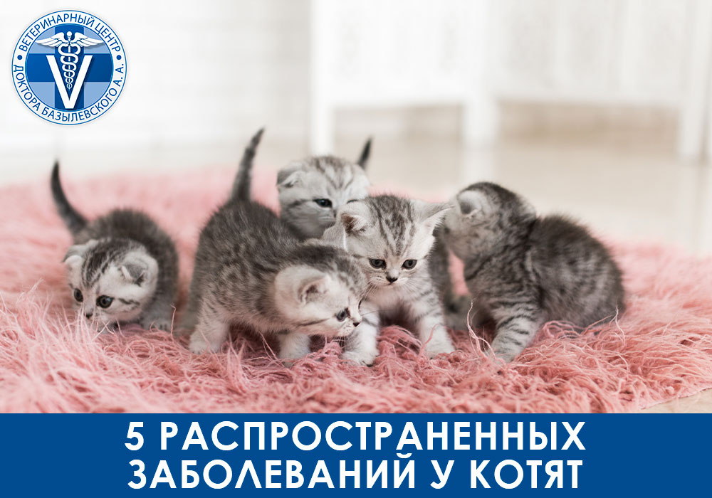 5 распространенных заболеваний у котят