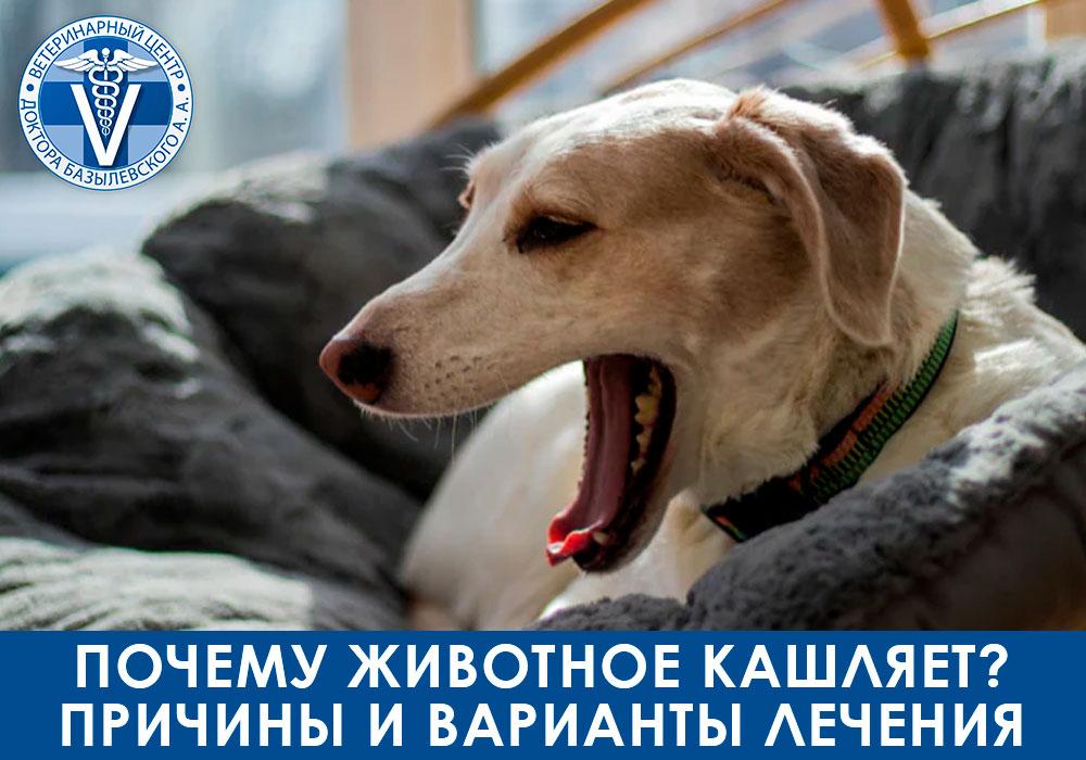 Почему животное кашляет