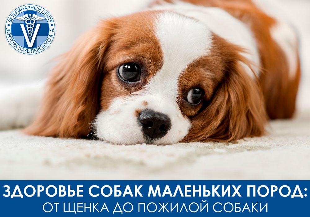 Как сохранить здоровье маленьких собак
