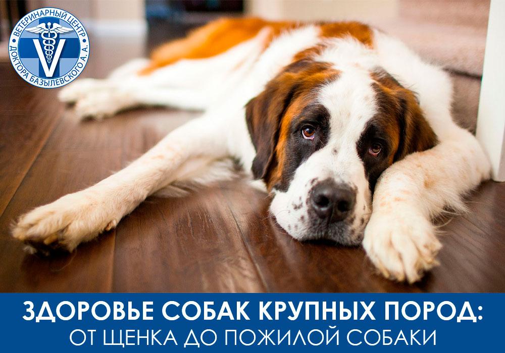 Как сохранить здоровье собак крупных пород - от щенка до пожилой собаки
